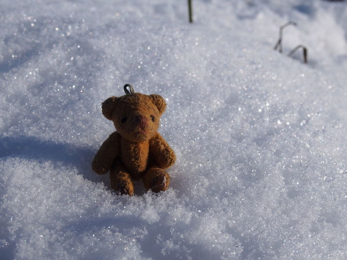 Snow Winter Cold Temperature Toy No People Teddy Bear Nature Day Stuffed Toy Representation Field Animal Animal Representation Animal Themes Mammal Land High Angle View Frozen Outdoors Extreme Weather Snowing