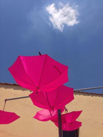 Pittiuomo Blue Sky Umbrella look up!
