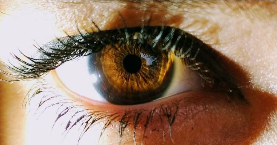 Human Body Part Human Eye Iris - Eye Sensory Perception Eyelash