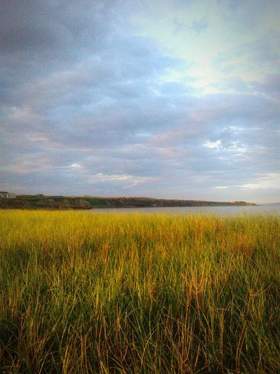 Horizon Over Water Beauty In Nature Landscape Cloud - Sky Outdoors Sea Beach Water Grass Nature Scenics