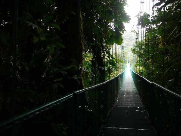 Travel Destinations The Way Forward Nature No People Tree Area Beauty In Nature Tree Adventure Over The Trees Cable Bridge Green Color Tropical Paradise Tropical Climate Journey Travel Forest