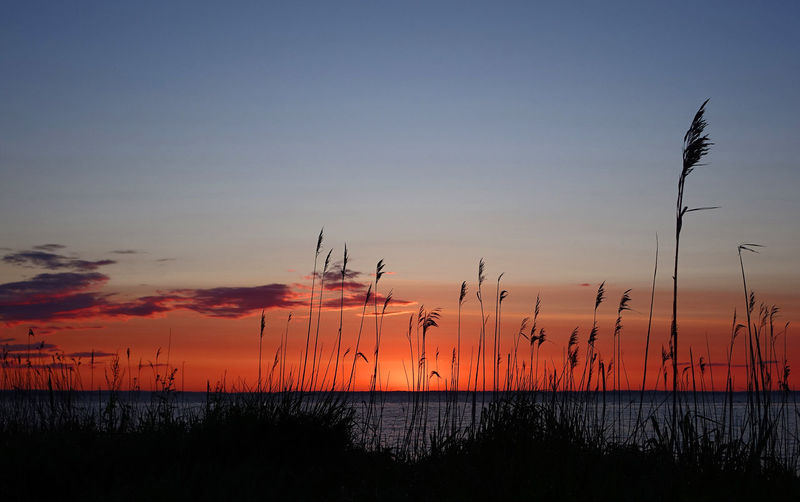 Silhouette of plants at seaside during sunset