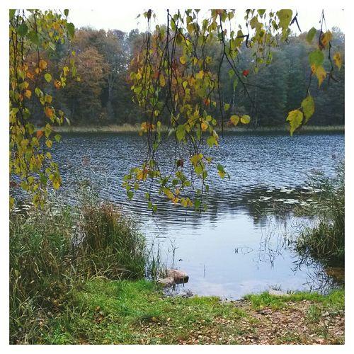 Water латвия Latvia VSCO EyeEm Autumn Fall осень Autumn Colors краски осени