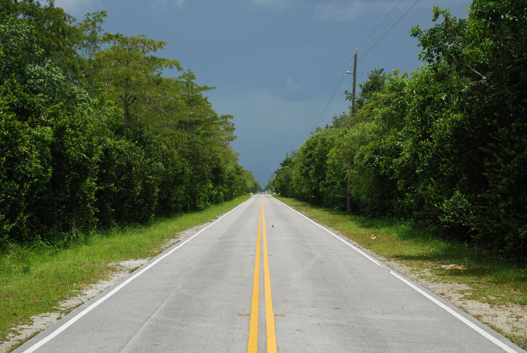 Loneliness Paint The Town Yellow Stormy Weather Tamiami Trail Travel Photography Traveling United States Yellow Line Big Cypress National Preserve Everglades  Green Color Heavy Sky Road Marking The Way Forward Vanishing Point Wilderness X-road