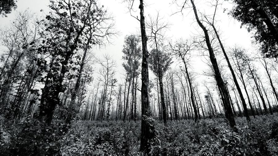 Tree Growth Nature Forest Landscape No People Fear Of The Dark Tree Trunk Branch Perspectives On Nature Rethink Things Black And White Friday