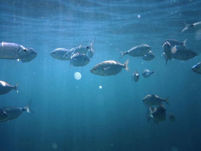 Fish swimming in undersea