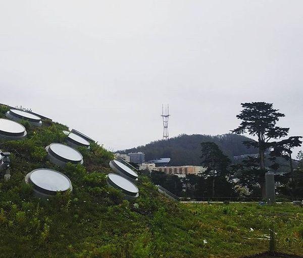 Happy Hump Day! @calacademy Academyofsciences Livingroof Goldengatepark Sflife Nannylife Sanfrancisco Californialiving FogCity @karlthefog Karlthefog☁️ Sutrotower