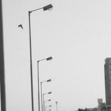 Minimal Minimalart Minimalartweeks Stree Lamp Post Beingminimal City Rajkot Bird Overbridge View _soi Indiapictures Clear Instalike India_clicks Ig_rajkot Ig_gujarat Huntfortheblue VSCO Vscocam Vscogrid Design