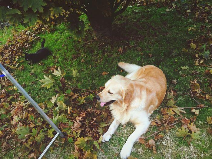 L'autunno coi miei cuccioli. 🐶🐱🍂 Hello World Taking Photos Relaxing Love Autumn Colors Lunigiana