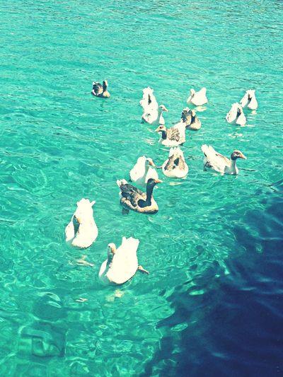 Suyun berraklığı.. Akvaryumkoyu Bodrum Turkey Summer