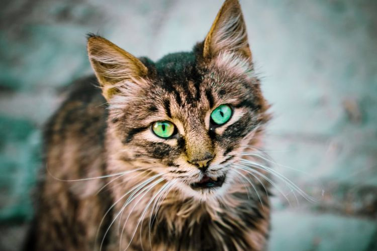 Photography Travel Canon Photographer Lightroom Mobile EOS Vacation Pets Portrait Feline Looking At Camera Domestic Cat Yellow Eyes Whisker Close-up
