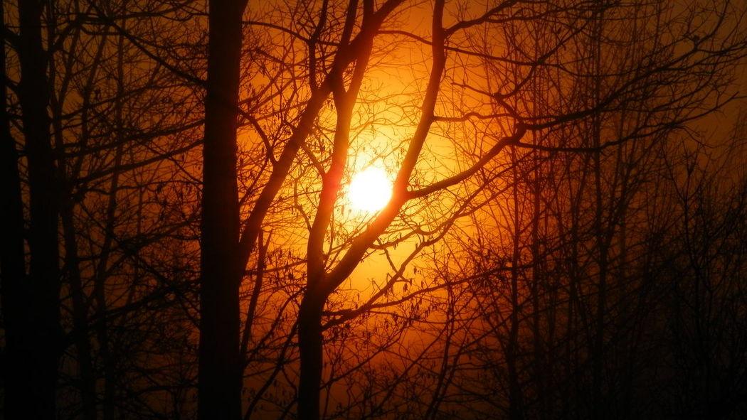 Trees And Sky Cloud - Sky Dramatic Sky Polska Poland Podkarpacie Kodak Kodak Easyshare EyeEm EyeEm Best Shots Eyeemphotography No Retouch Bez Retuszu Sky Beauty In Nature Scenics Sun Tree Nature Wschód Słońca Sunrise