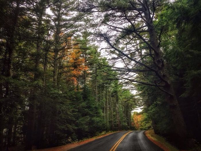 Road Country Road Beauty In Nature Empty Road Fall Collection Scenics Fall Colors It's Fall Autumn CarolSharkeyPhotography Maine