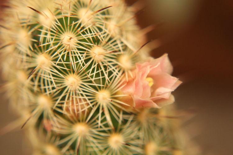 Cactus Flower Canon Close-up Macro Nature Bogotá