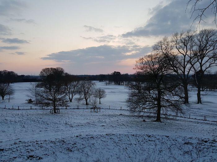 Winter Sunset Snow ❄ Winter Sunset Sunset Cold Trees
