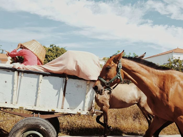 Person traveling on trailer with horses against sky