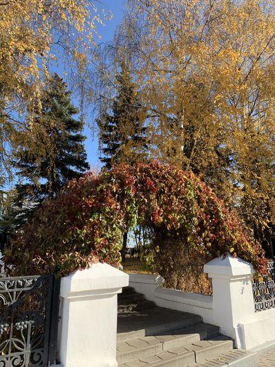 Plant Autumn