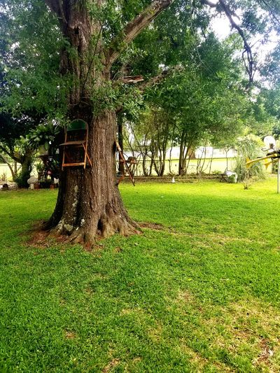 Tree Grass Green Color Park - Man Made Space No People Outdoors Nature EyEmNewHere Traveling Home Landscape Forest For The Trees Texas Texas Landscape Texas Made Day Sky Growth Let's Go. Together.