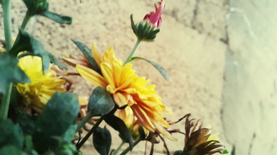 Orange Orange Color Orange Flowers 😍🌺🌺🌺 🌺🌹🌷flower 🌼🌼 Flower Orange Flower 🌼flowers🌼 🌸~ 🌸flower🌸 Flower 🌺🌷⚘🌹 🌸Nature🌸 🌹 🌹🌷 🌷 💐 💐 🌹🌹🌹🌹🌹(^_-) Nature Collection Nature Photography ❤❤ 🌼❤❤👍👌💋 Beautiful 🌸🌸🌷 ❤️❤️😍😍 Nature Beautiful Flowers 🌸 Beautiful Nature 🌸 Good 🌷 Flowers 🌹