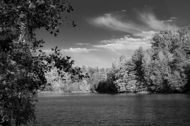 Seen On My Walk See What I See Wasser See Water Waldsee Forest Trees Wald Forestphotography Nature Forest Photography Natur Relaxing Hello World Taking Photos Hanging Out Enjoying Life Blackandwhite Black & White Blackandwhitephotography Black And White Collection  Black White Schwarzweiß Schwarz & Weiß