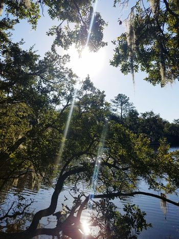Tree Tree Beauty In Nature Trees Tree_collection  Water Reflection Water Reflections Spanish Moss Moss Lake Outdoors Branch Reflection In The Water Tranquility Scenics Reflect Sunbeams On Water Sunrays Sunshine ☀ Sun_collection