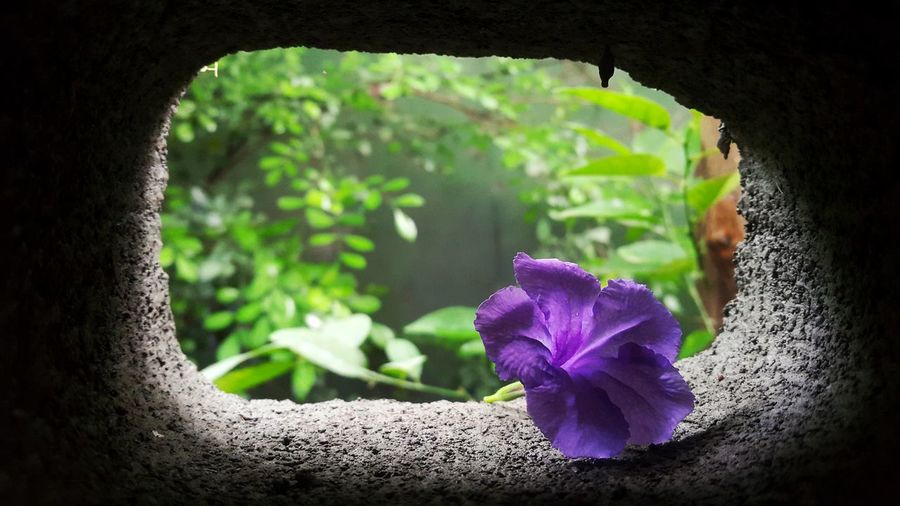 Flower Nature Purple Day Fragility Beauty In Nature Plant No People Freshness Growth Outdoors Flower Head Close-up