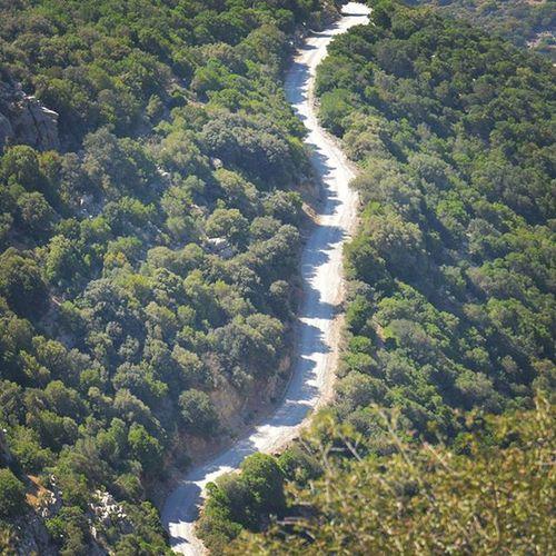 Tunisia IgersTunisia Forest Mountain Shadow Tree Nature Wikilovesearth Wletn2016 Wikimediatn ظلال الغابة الزغوانية ^_^