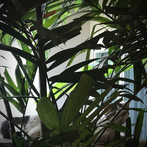 เหมียว แอบอยู่น๊าาา Where Are You Now? Where Are You? Cat Pet