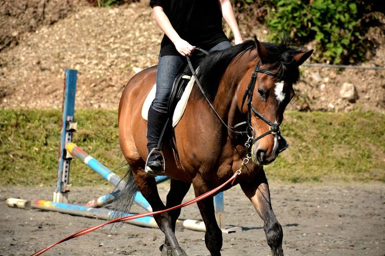 Low Section Of Person Riding Brown Horse On Field