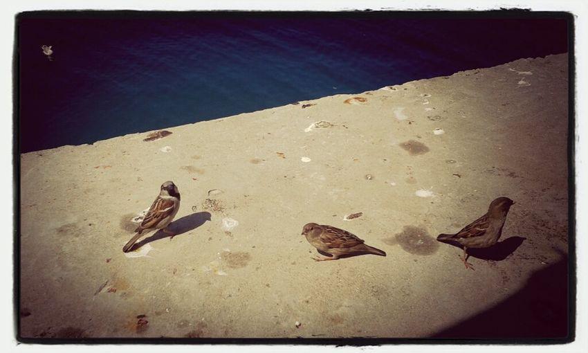 Lowe Birds