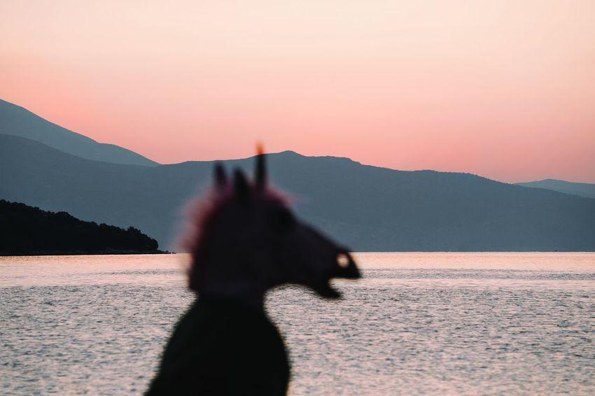 The morning walk. Nature Water One Person Focus On Background Sea Seascape Unicorn Unicorn Head Mountain Silhouette Shore Sunset Sun
