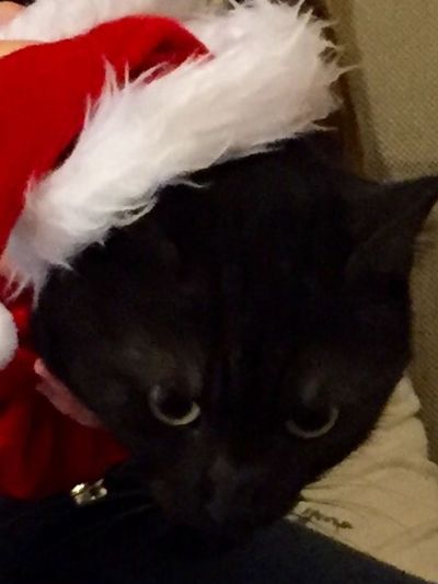 Christmas cat With A Santa Hat