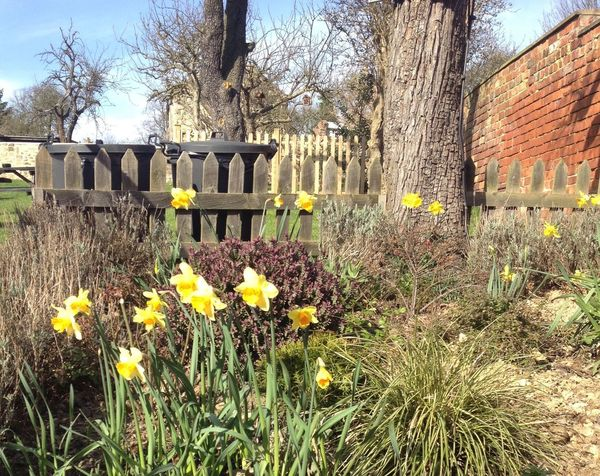 Daffodils Beer Garden Garden What a bonnie day it was yesterday! 😎😎😎 Yorkshire Landscape_Collection Nature_collection Urban Spring Fever