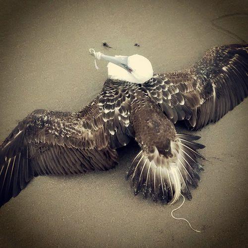Venecia la gaviota xd Seagull BoobyBird Gaviota