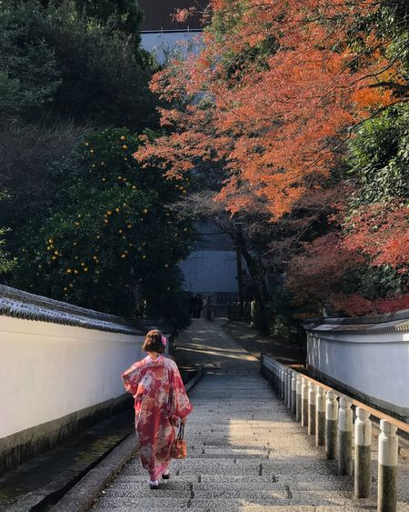 Quiet time. ShotOnIphone People Nature Kimono Building Exterior Day Women Lifestyles Architecture Railing Outdoors Built Structure One Person Rear View Full Length Walking Tree Real People Japanese Style Japanese Temple Adventures In The City My Best Photo