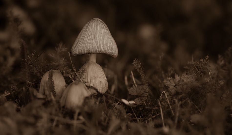 Mushroom Nature Growing Beauty In Nature Selective Focus Close-up Canonphotography Canon_photos Canon 6D Summer Sweden TheWeekOnEyeEM The Week On EyeEm