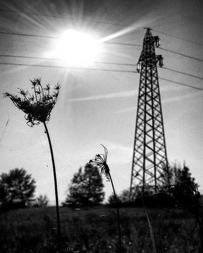 Wires and Flowers Ig_asti_ Traliccio Ig_biancoenero _world_in_bw Dsb_noir Eranoir Bnwitalian  Excellent_bnw Ig_worldbnw Vivobnw Igclub_bnw Loves_noir Igs_bnw Ig_contrast_bnw Master_in_bnw  Top_bnw Tv_pointofview_bnw Loves_united_asti Ig_italia_ Ig_captures Streetphotographer Featuredmeinstagood Viatosto Photowall Allshots_ hot_shotz phototag_it visualsoflife shadow