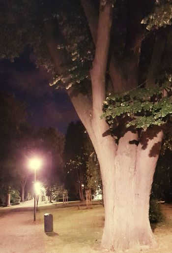 No People Beauty In Nature Belgium♡ Nightphotography Oil Pump Close-up Nature EyeEm Diversity Photography Is My Escape From Reality! Night Tree_collection