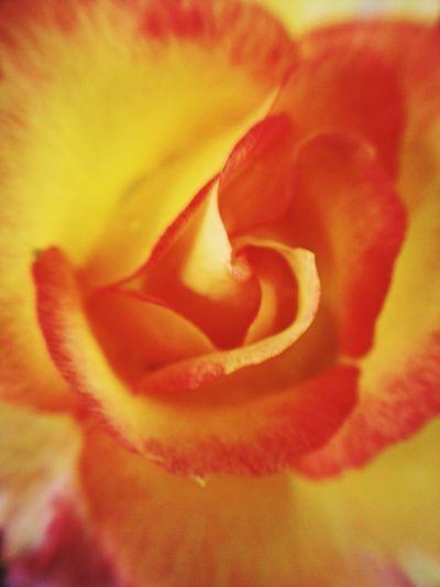 Macro shot of flower