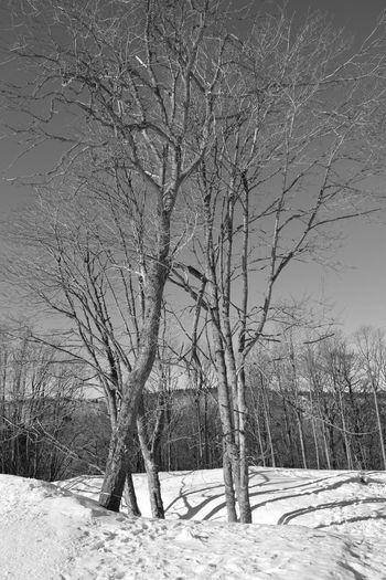 MONTAGNE Snow