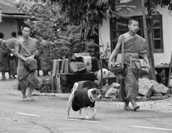 Alms giving, Luang Prabang, Laos Alms Giving Buddhist Monks Luangprabang Laos Photooftheday Blackandwhite Photography Streetphotography Travel Photography Dog Domestic Animals Full Length People Outdoors Portrait Mid Adult Men
