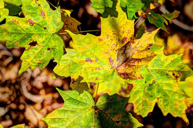 Why is the decay in leaves so attractive to us, but the decay in people as they age so unattractive? I keep asking myself... Check This Out Fall Colors Fall Fall Leaves Decay Beauty Of Decay Leaves Aging The Great Outdoors - 2015 EyeEm Awards Fall Beauty