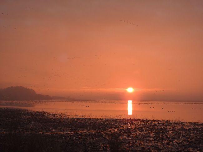 Landscape Sunrise Sky Birds 伊豆沼物語