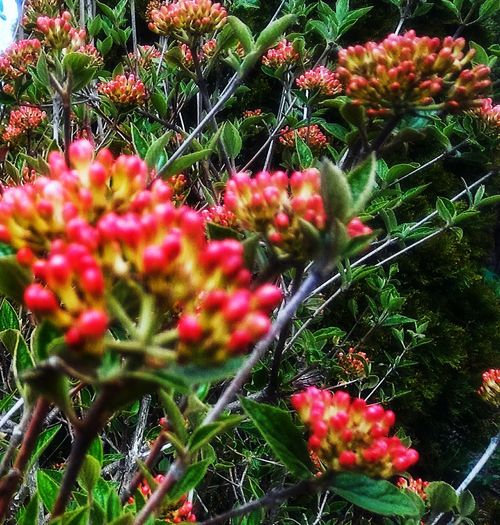 Bright and beautiful...~ Flowerlovers In Portland Maine USA Happiness Spring Flowers Beauty In Nature No People Nature_perfection Nature Lover Color Of Life Loving The Landscape My View Flower Red Close-up Plant Green Color Flower Head
