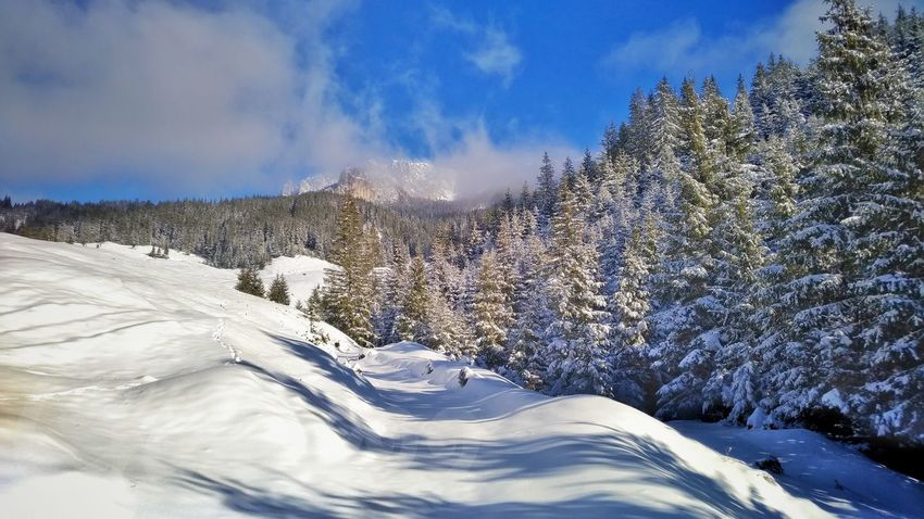 blue sky...white snow and clouds....green pine trees... Pine Woodland Forest Blue Sky And Clouds Mountains And Valleys Motion Sky Snow Covered Snowcapped Mountain Snow Woods Pinaceae Pine Tree Winter Cold Temperature Deep Snow Rocky Mountains Cold Scenics