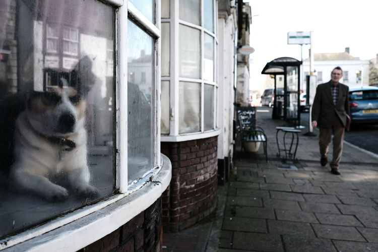 Dog on street in city