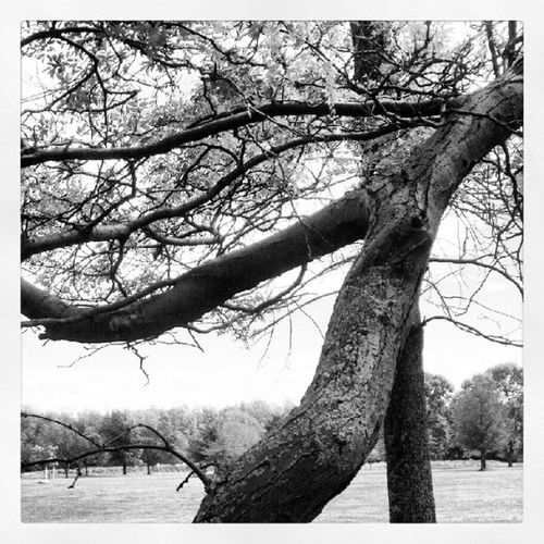 Tree Twistedtree Angola LakeErie