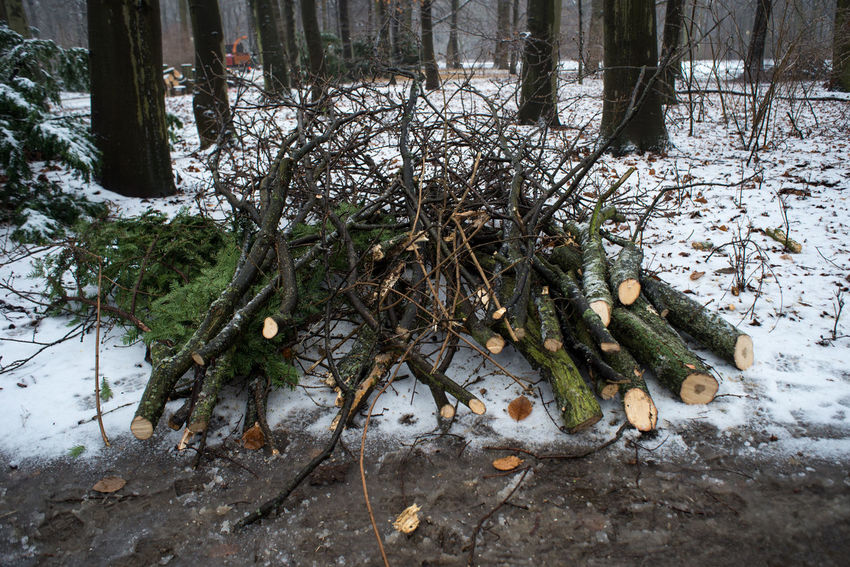 Berlin City City Life Cold Temperature Europe Forest Logs Nature Outdoors Snow Strees Streetphotography Tree Tree Trees Winter Winter