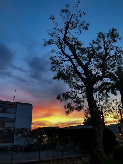 Low angle view of silhouette tree and building against sky during sunset