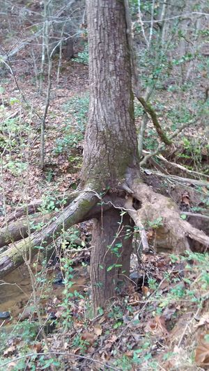 Tree Trunk Tree Nature Day Outdoors No People Growth Grass Beauty In Nature Close-up Perspectives On Nature Forest